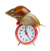 Snail On Clock