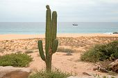 Cactus On Divorce Beach At Lands End In Cabo San Lucas In Baja California Mexico Bcs poster
