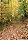 Golden Path