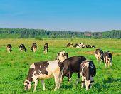 View Producing Milk Animals