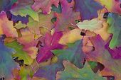 Background Of Colorful Autumn Leaves On Forest Floor. Multicolored  Foliage On The Ground. Autumn Sc poster