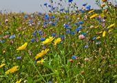 Close de uma margem de campo de flores silvestres