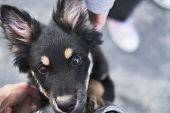 Portrait Of A Little Homeless Puppy Looking In The Eyes. Adoption Of A Dog Or Getting Introduced To  poster