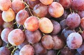 Healthy Fruits Red Wine Grapes Background/ Dark Grapes/ Blue Grapes/wine Grapes,red Wine Grapes Back poster
