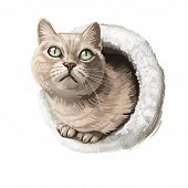 Australian Or Spotted Mist Cat Isolated On White Background. Digital Art Illustration Of Hand Drawn  poster