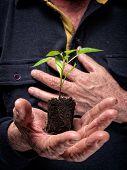 Planta de futuro