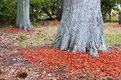 Redwood Mulch Ring