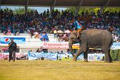 Surin Elephant Kicking Soccer Ball