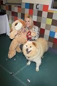 LOS ANGELES, CA - MAY 3: Joan Van Ark, dog Goldie at the grand opening of the Pooch Hotel on May 3,