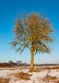 Solitairy Tree In A Dutch Winter Landscape