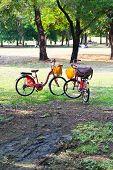 Bike color bright garden public