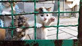 Little Kittens Are Played With The Old Mesh Fence, Kitty Climb Up. poster
