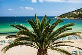 Costa Smeralda Beach Escape. Amazing Beach Views From Sardinia, Italy. Nobody On The Beach. Palm Tre poster