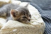 Gray Striped Kitty Sleeps On Knitted Woolen Beige Plaid. Little Cute Fluffy Cat. Cozy Home. poster