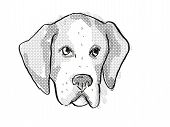 Retro Cartoon Style Drawing Of Head Of An American Foxhound  , A Domestic Dog Or Canine Breed On Iso poster