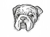 Retro Cartoon Style Drawing Of Head Of A Bulldog  , A Domestic Dog Or Canine Breed On Isolated White poster