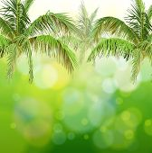 Green bokeh with branches of palm trees. Bitmap copy my vector