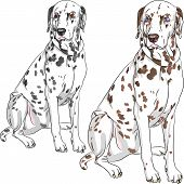 Vector Set Dog Dalmatian Breed Sitting