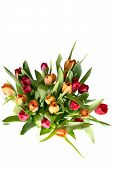 Bouquet of tulips on white - vertical