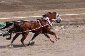 stock photo of chariot  - horses pulling a chariot in a race - JPG