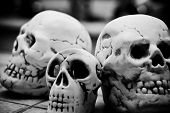 Homo Sapience Cranium