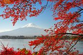 Mt Fuji in the Fall season.
