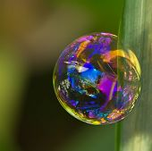 Soap Bubble With Reflections