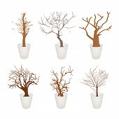Set Of Abstract Dry Trees In A Flower Pot