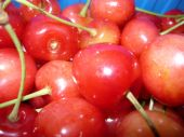 Wild Or Sweet Cherry, Gean In Plastic Box Close Up