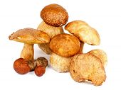 stock photo of bolete  - Heap of Fresh Ripe Porcini Mushrooms Orange - JPG
