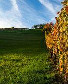Empty vineyard