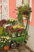 Outside Florist Shop