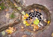 Drainage Hatch In The Autumnal Park With Yellow Leaves
