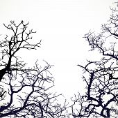 Background with silhouettes of bare branches of trees