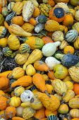 Colorful Autumn Gourds