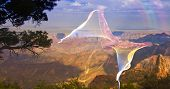 Ghostlike bird in flight above grand canyon rim