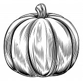 image of lithographic  - A vintage retro woodcut print or etching style pumpkin illustration - JPG
