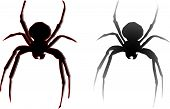 image of black widow spider  - Spiders Silhouette Black Widow vector on white - JPG