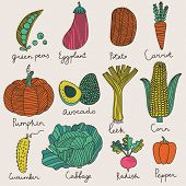 Tasty vegetables in vector set - green peas, eggplant, potato, carrot, pumpkin, avocado, leek, corn,