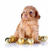 Puppy With New Year's Balls.