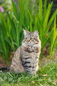 pussycat outdoor