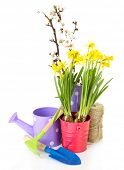 Composition with garden equipment and flowers in metal bucket isolated on white