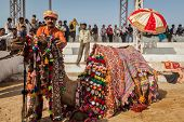 PUSHKAR, INDIA - NOVEMBER 22, 2012: Man decorating his camel for camel decoration contest at Pushkar