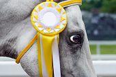 Horse-winner in sports trials.
