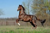English thoroughbred horse jumping with a beautiful background