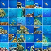 pic of sea-scape  - Coral fish in  Red Sea - JPG