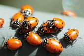 Beautiful Lady Bugs