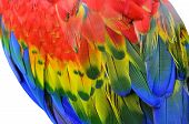stock photo of green-winged macaw  - Green - JPG