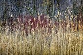 Winter reeds and forest at Scarborough Bluffs in Toronto, Canada.