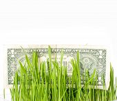 Bills in the green grass, finance concept. Growing money . The vegetation of dollar on plants
